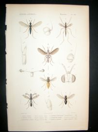 Cuvier C1840 Antique Hand Col Print. Insects 180